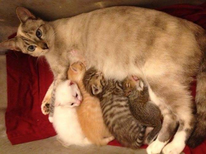 Какие паразиты могут встречаться у кошек
