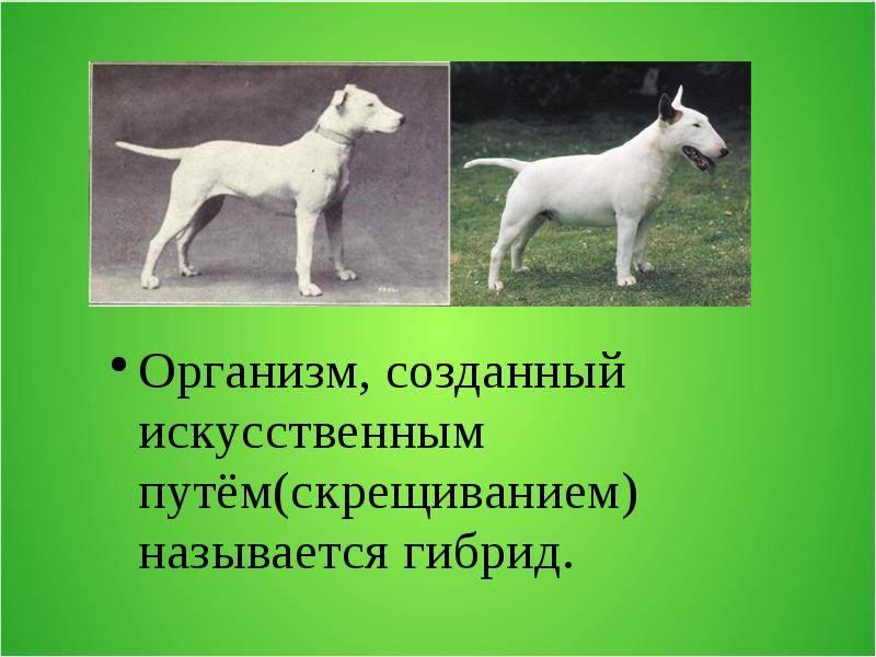 Породы собак, выведенные от домашнего животного и дикого зверя