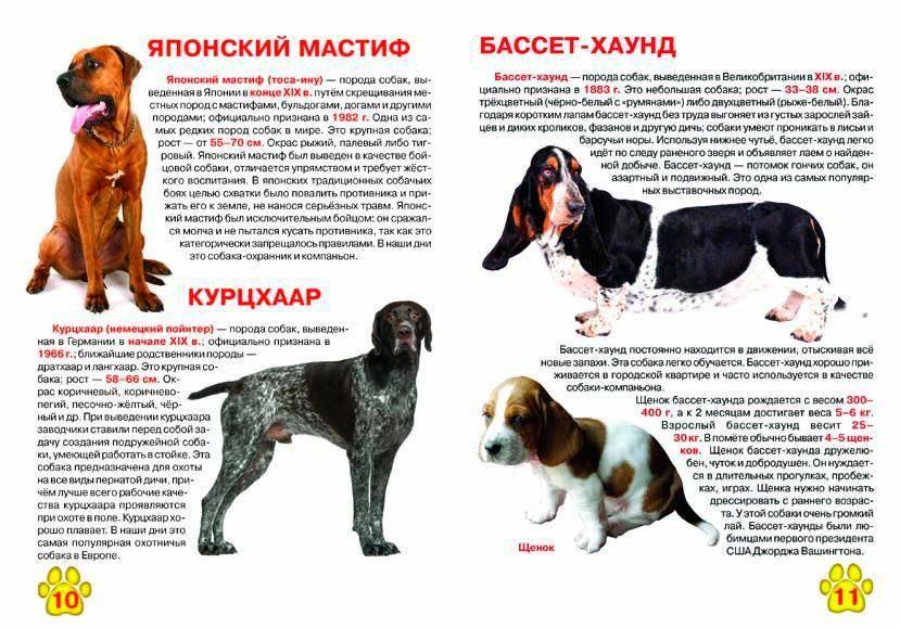 Помски, питски, толматин и еще 6 неофициальных пород, которых получили от скрещивания разных собак