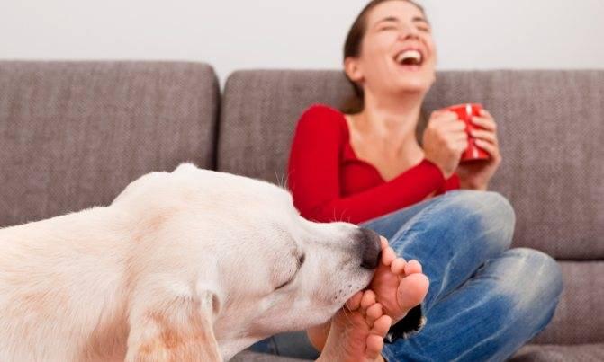 Почему собаки могут постоянно облизываться, сглатывать и причмокивать