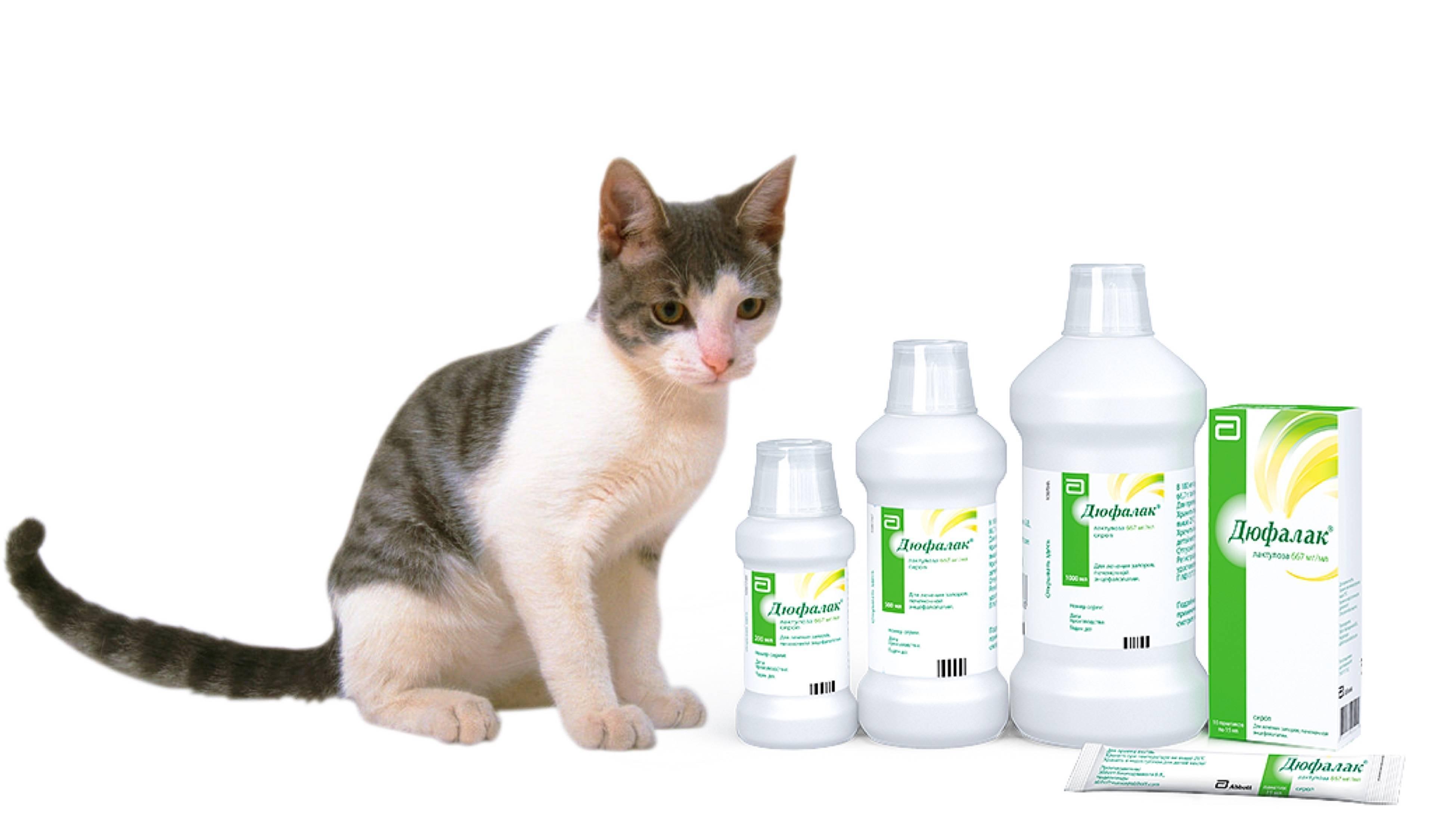 Всё о диареи у кошки: лечение в домашних условиях