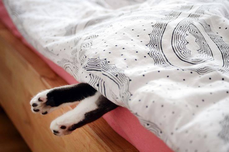 6 причин, почему кошка гадит на кровать: что делать и как отучить