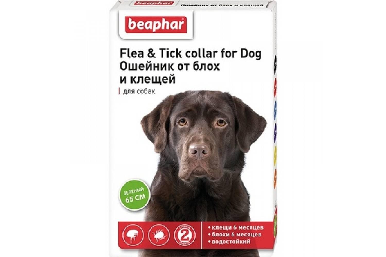 Ошейник от клещей для собак: какой лучше? - kot-pes