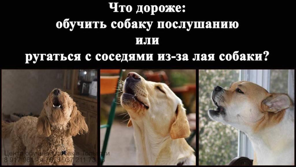 У соседей постоянно лает, воет собака: что делать, ночью, куда жаловаться, образец заявления участковому