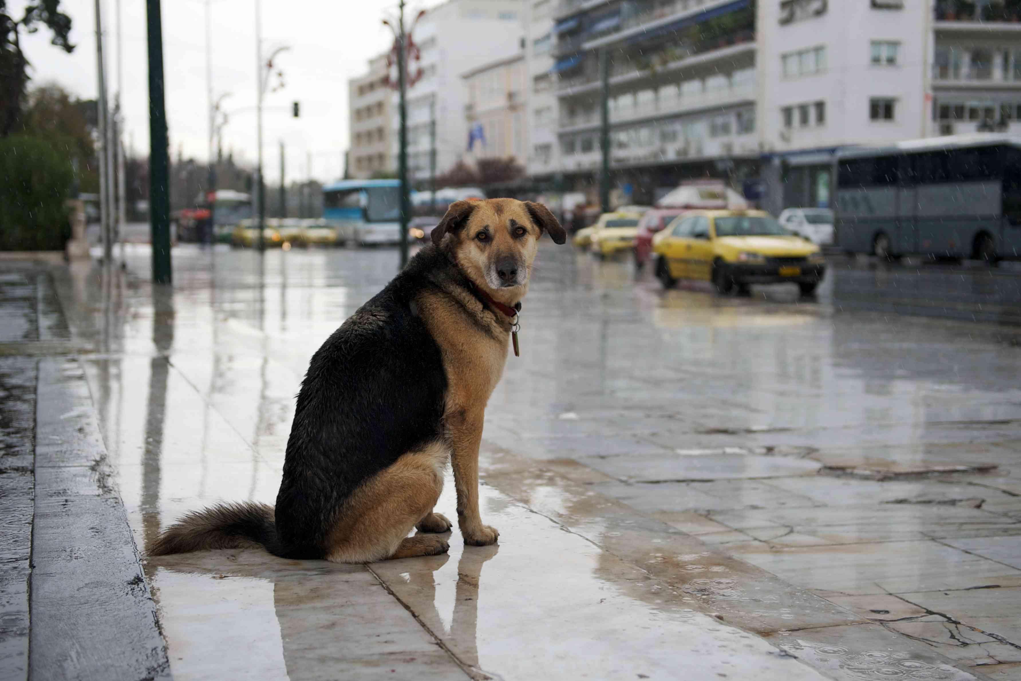 Что делать, если потерялась собака: полезные советы где и как искать