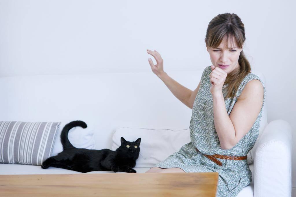 Избавление от аллергической реакции на кошку: можно ли вылечить и как