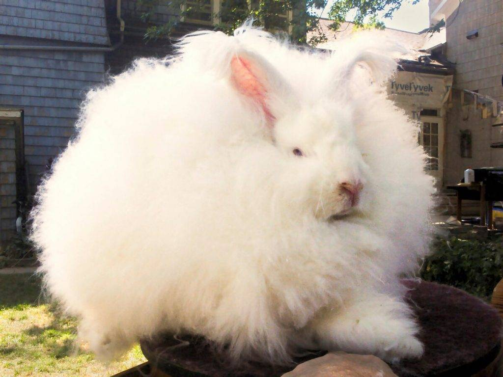 Виды и породы декоративных кроликов: описание, срок жизни, питание в домашних условиях и фото