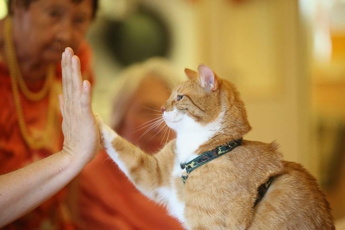 Как понять что кошка любит хозяина. 6 доказывающих это причин