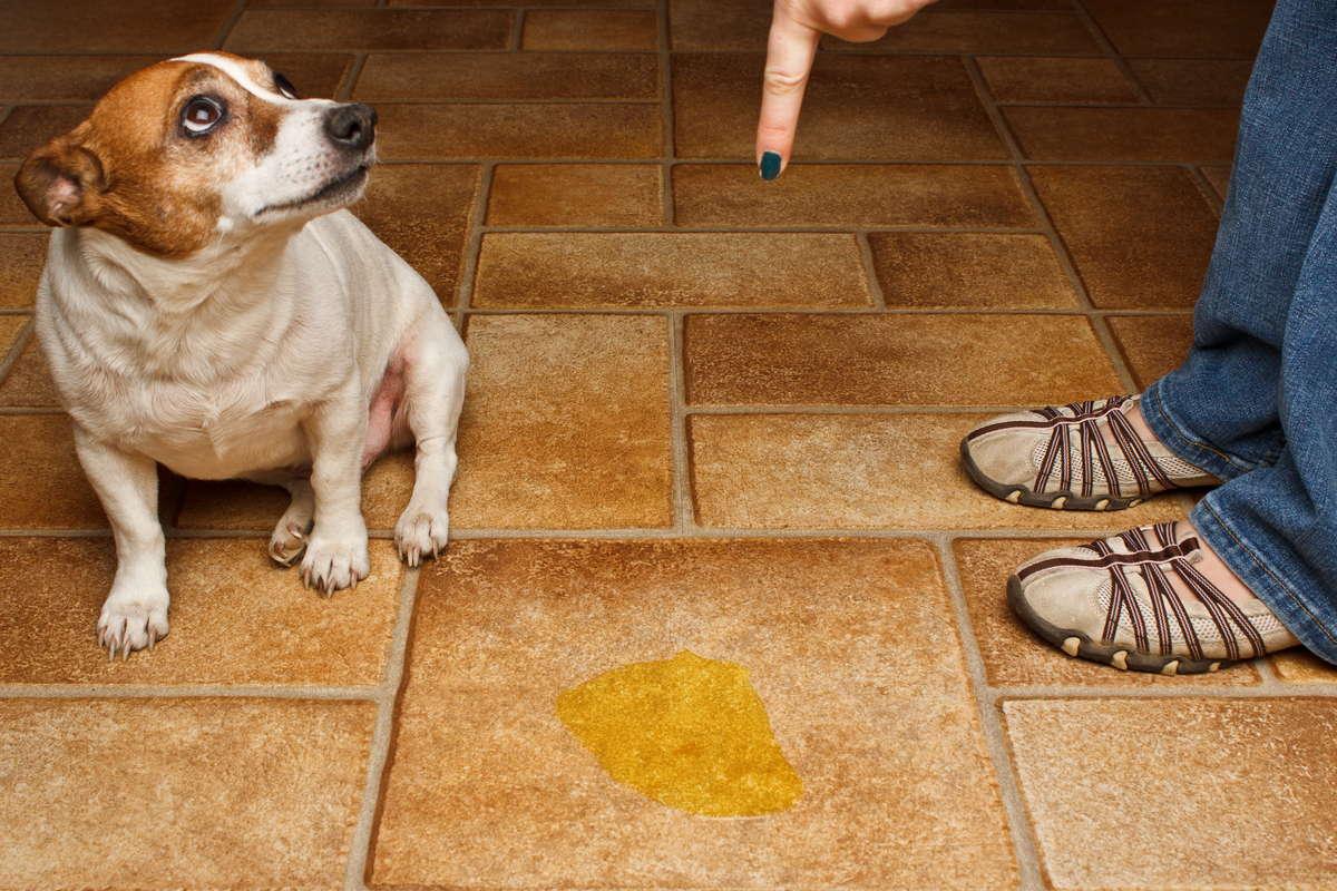 Как приучить собаку из приюта к туалету на улице?