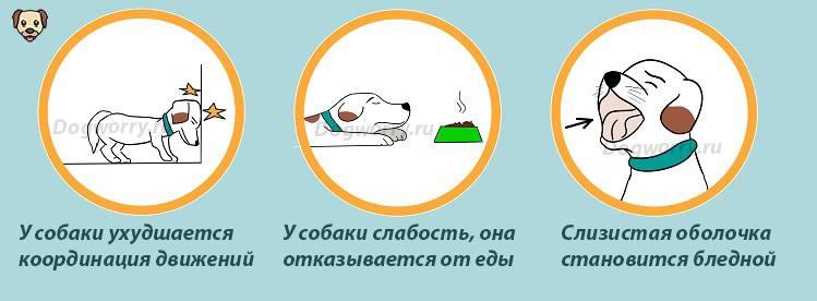 Отравление у собаки - симптомы, признаки и лечение 2020