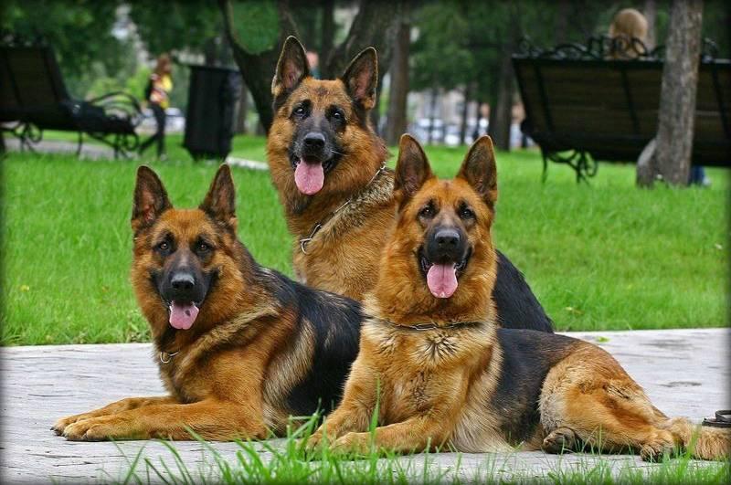 Топ 10 самых умных собак в мире | на всякий случай