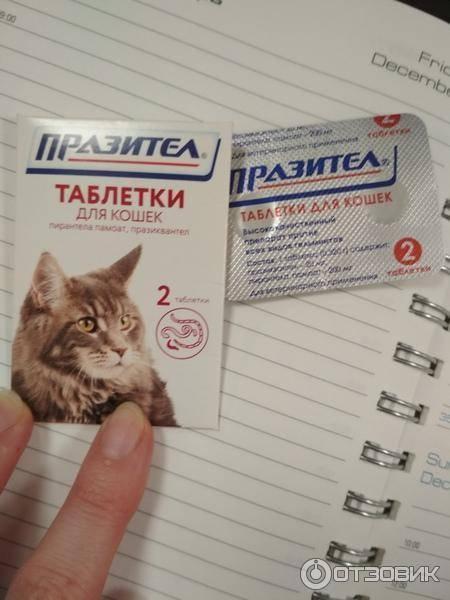 Инструкция по применению суспензии празител для кошек и котят