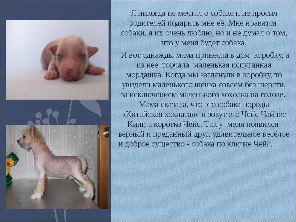 Как выпросить у родителей собаку — в доме или квартире