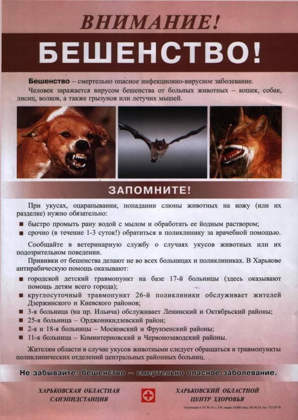 Бешенство: симптомы у человека и животных - вирусные болезни