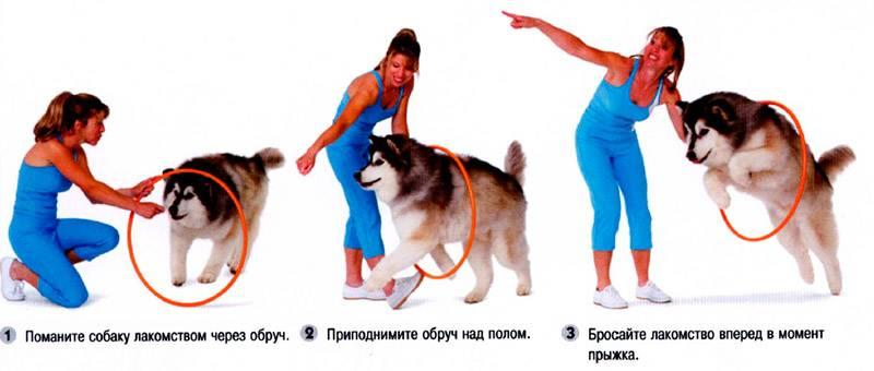 Как можно отучить собаку прыгать на хозяина