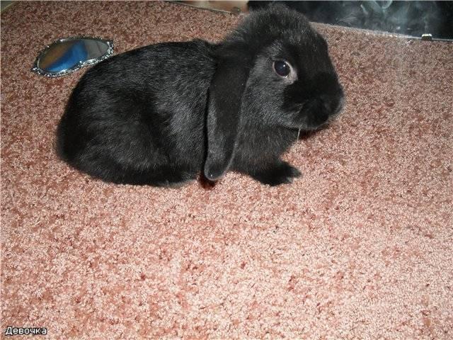 Имена для черных кроликов мальчиков. смешные и забавные имена.