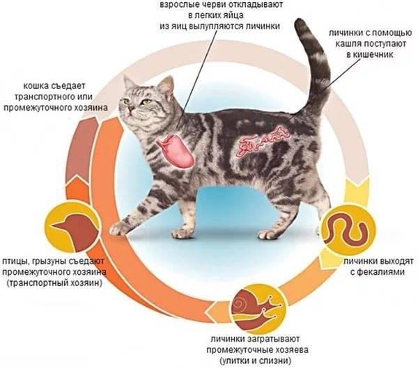 У собаки глисты: как обнаружить, симптомы, причины, лечение, профилактика