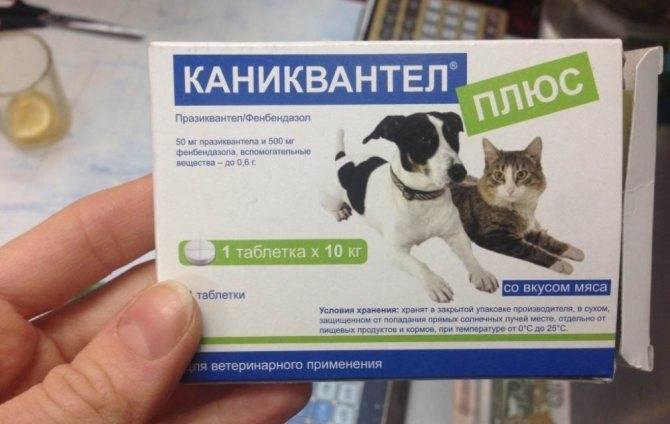 Каниквантел плюс для кошек: правила избавления питомца от паразитов