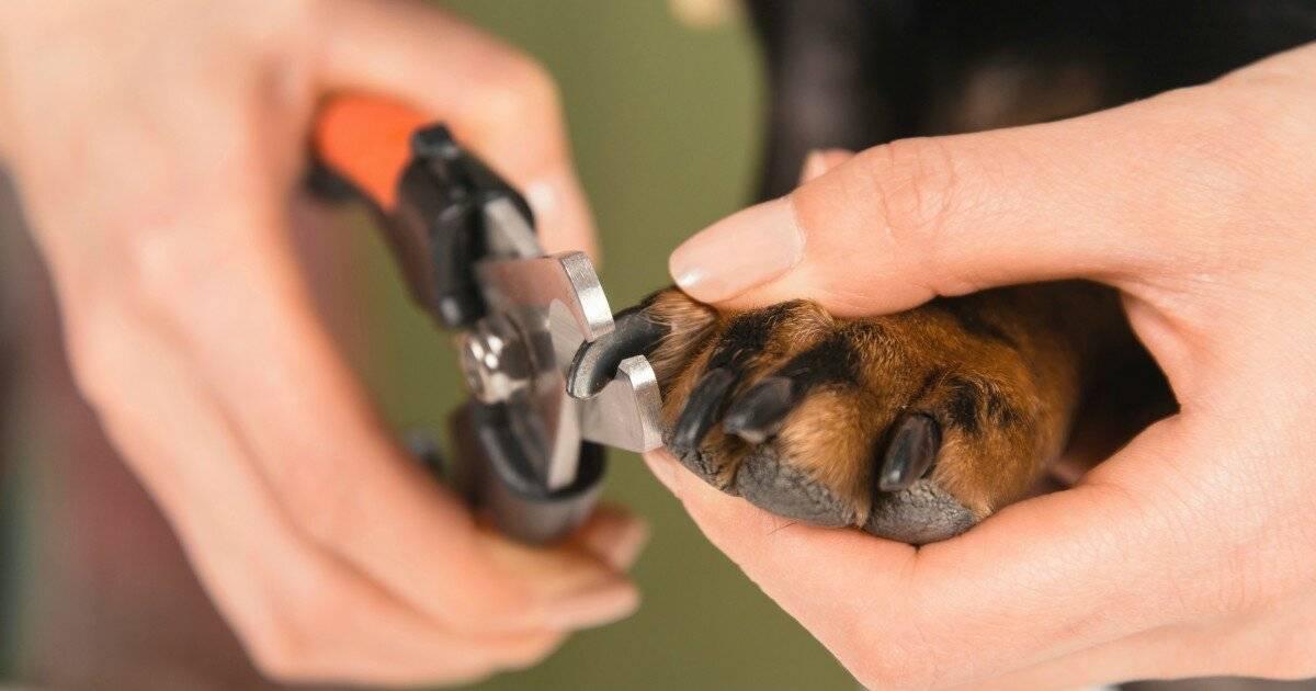 Как подстричь когти собаке в домашних условиях: способы и полезные советы
