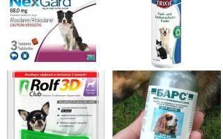 Ошейник от клещей для собак — эффективность, особенности, преимущества и недостатки