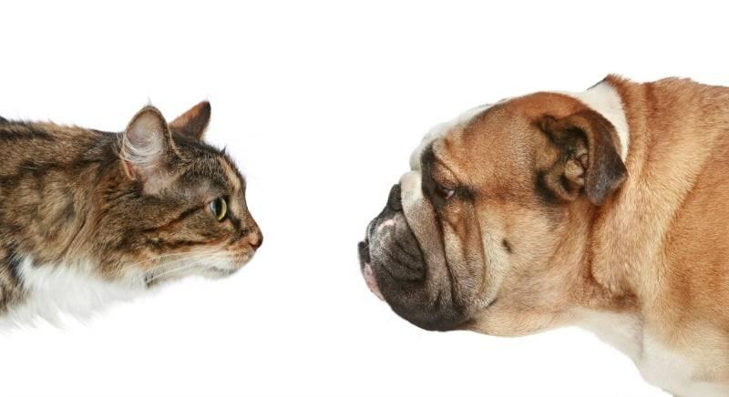 Смеющиеся животные: какие питомцы умеют выражать эмоции