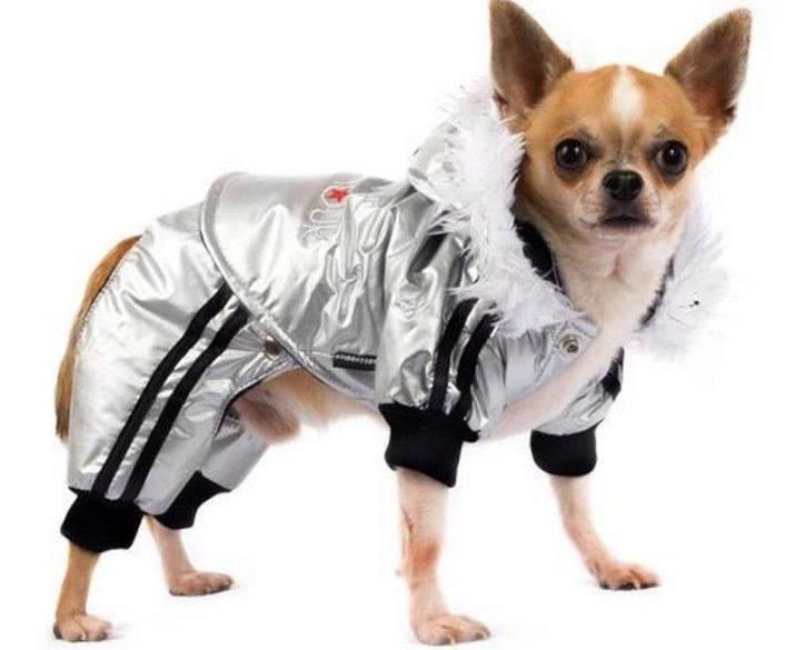 Одежда для собак (54 фото): таблица размеров одежды для представителей маленьких и больших пород. как определить размер с помощью ростомера?