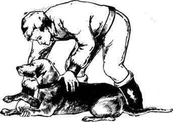 Команды для собак: список основных и как научить