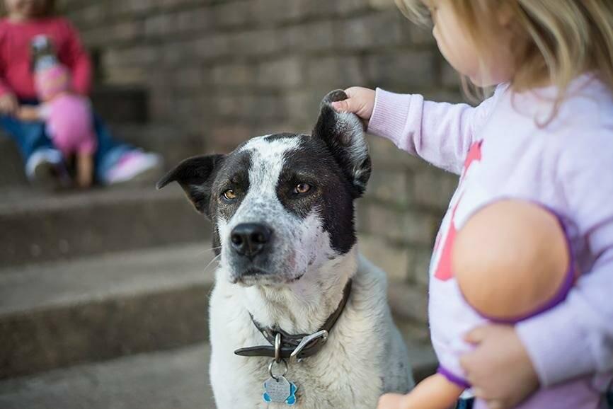 Как без конфликтов и обид научить щенка не бояться гулять на улице ⋆ собакапедия