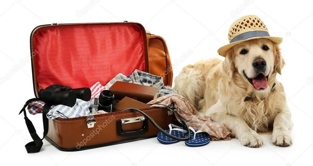 Лучшие зоогостиницы москвы: где оставить кошку или собаку на время отпуска - телеканал поехали!