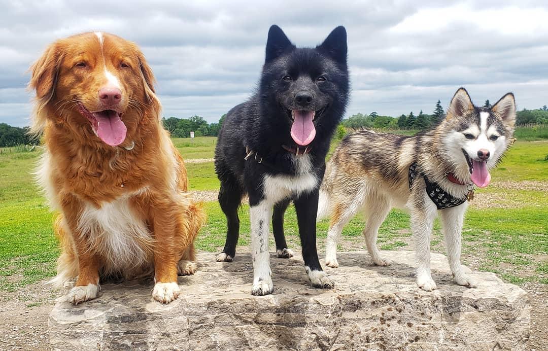 Метисы собак: отличия от породистых животных, достоинства и недостатки, выбор щенка