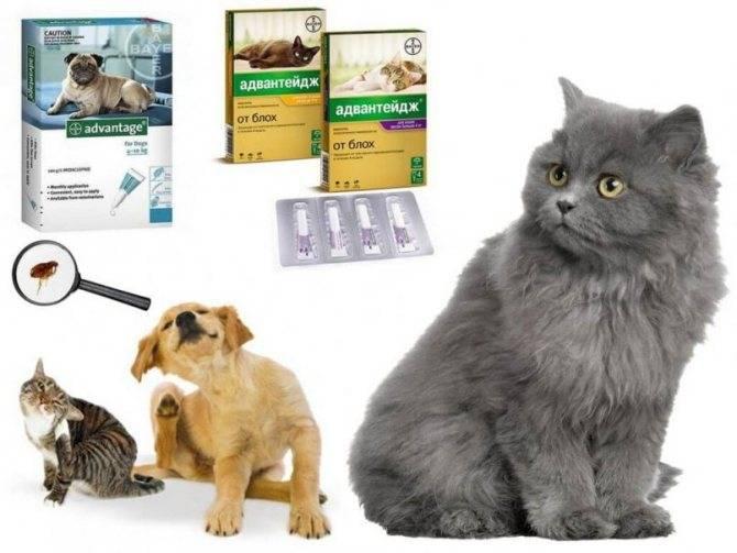 Адвантейдж для кошек: состав, форма выпуска, механизм действия