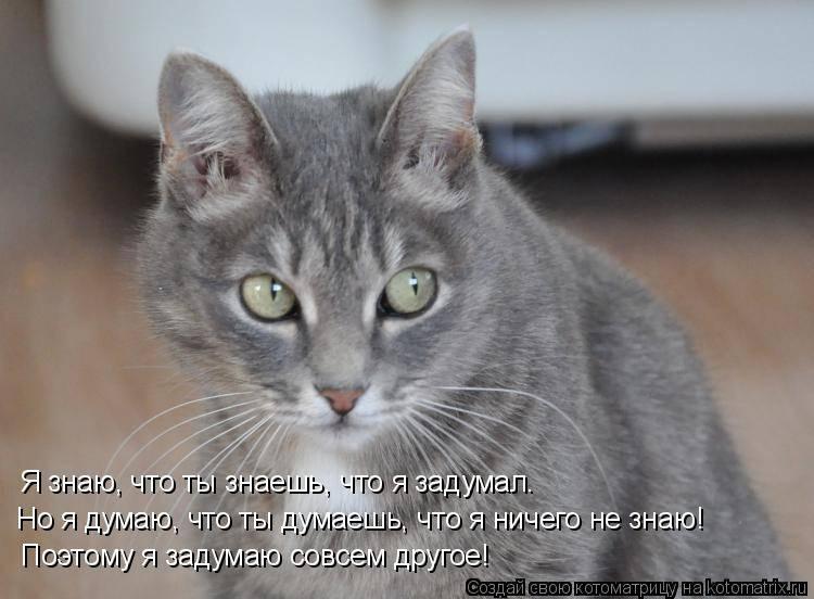 О чем думают кошки и думают ли вообще? | animal  town | яндекс дзен