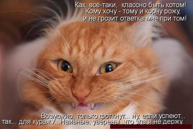 Из-за чего коты могут расстраиваться
