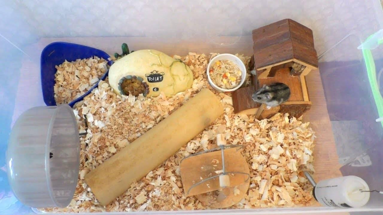 Чем кормить джунгарских хомяков в домашних условиях?