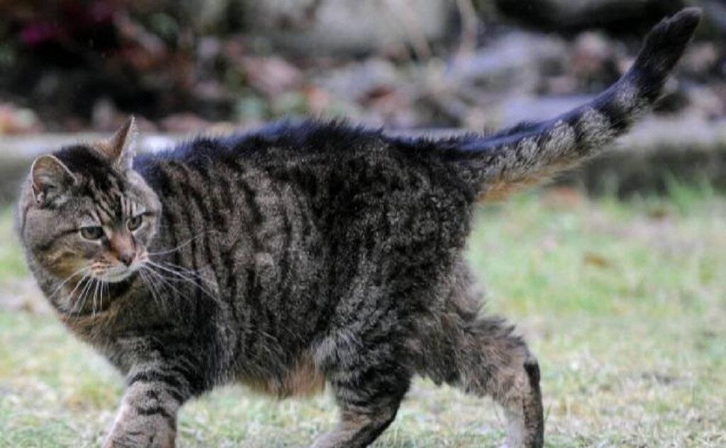 Самые старые в мире коты (23 фото): сколько прожила самая старая кошка? породы котов-долгожителей и долгоживущие животные в книге рекордов гиннеса