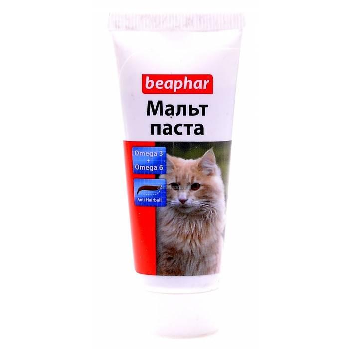 Как вывести шерсть из желудка кошки или кота: советы владельцам