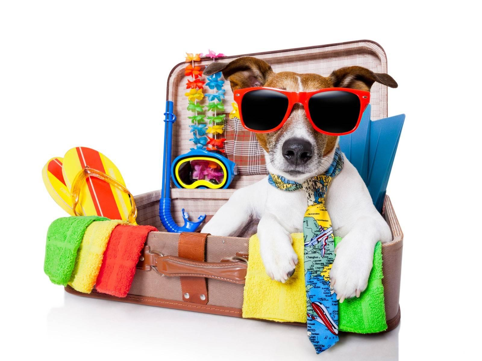 Зоогостиницы в москве - с кем оставить собаку на время отпуска