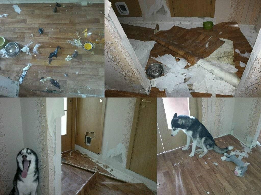 Опасность рядом: почему собака скулит и как ее отучить? основные причины, почему собака скулит