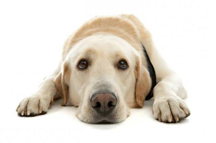 Собака не ест что делать причины