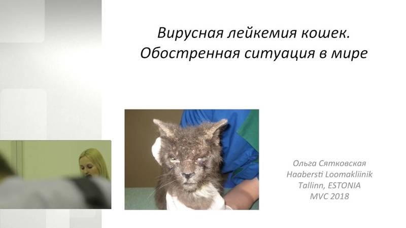 Вирус иммунодефицита у кошек передается ли собакам