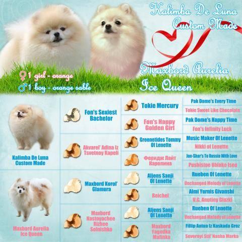 Клички для белых собак, красивые имена для щенка мальчика и девочки.