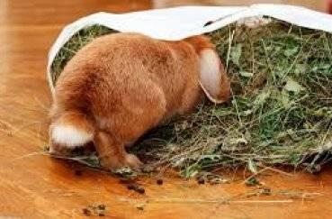 Как спят кролики видео