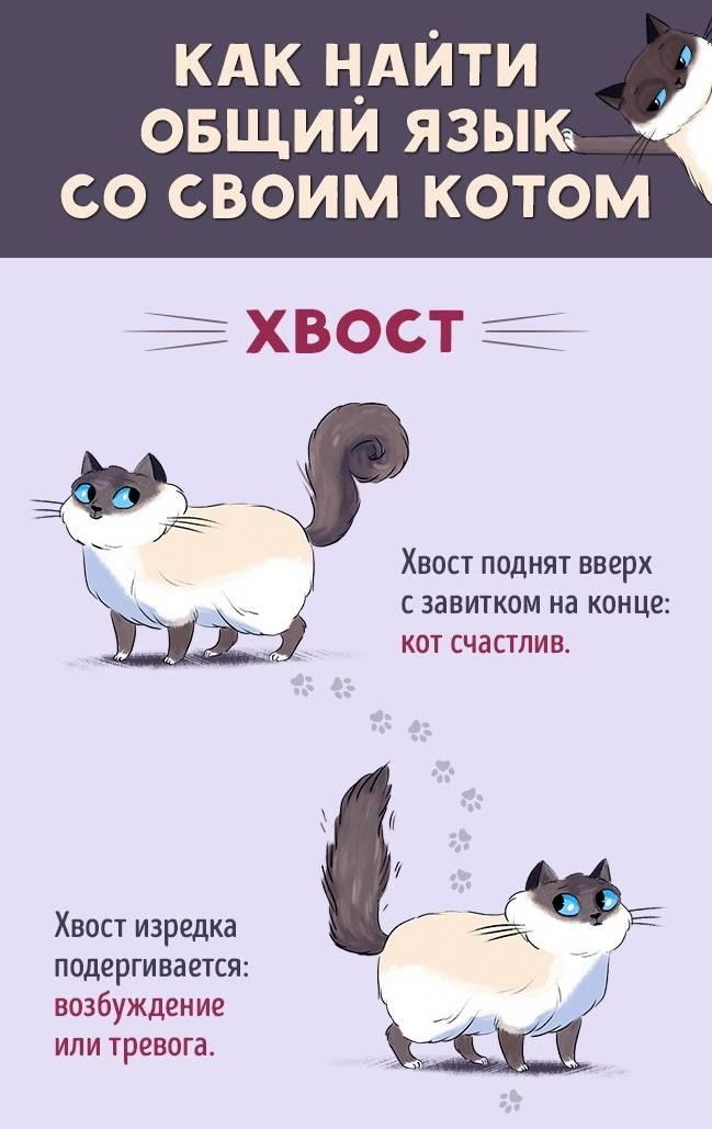 Зачем кошке хвост?