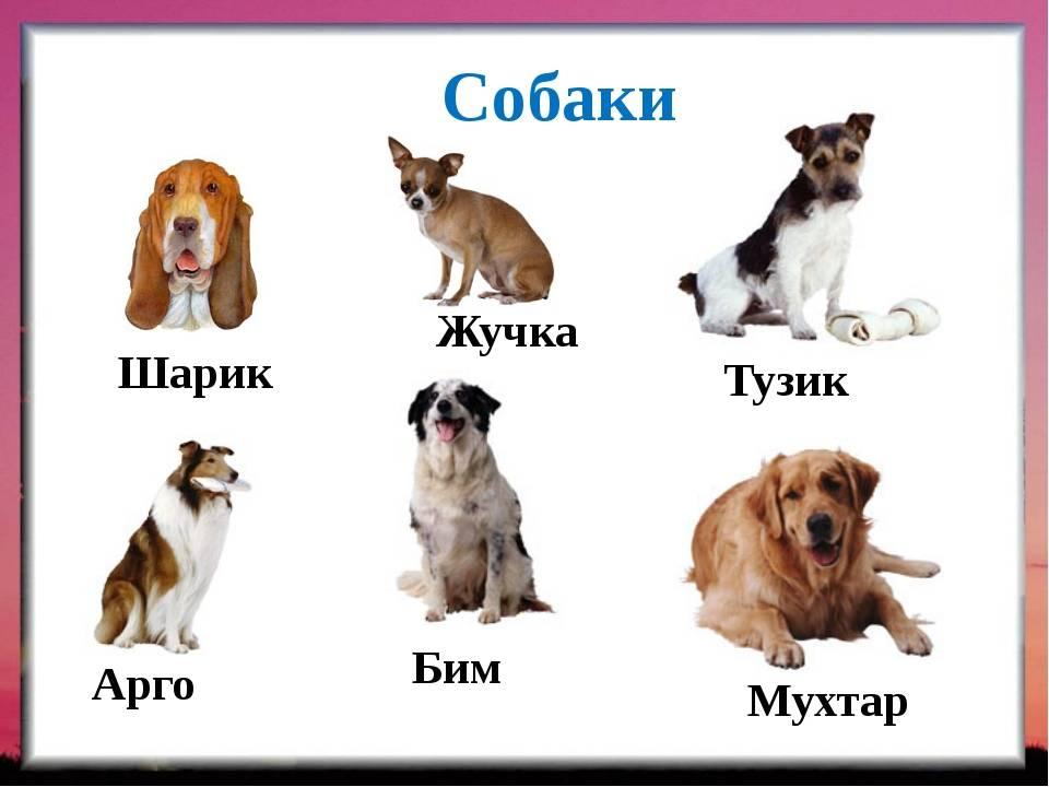 Имена для породистых собак, красивые клички для собак мальчиков и девочек.