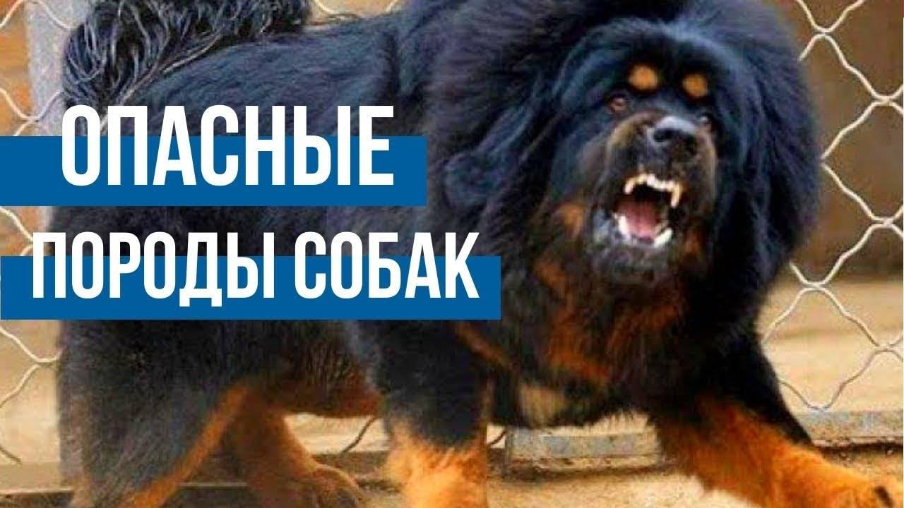 Поднялся вой: правительство утвердило список опасных пород собак