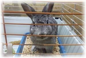 Что необходимо делать, если у кролика понос, способы лечения