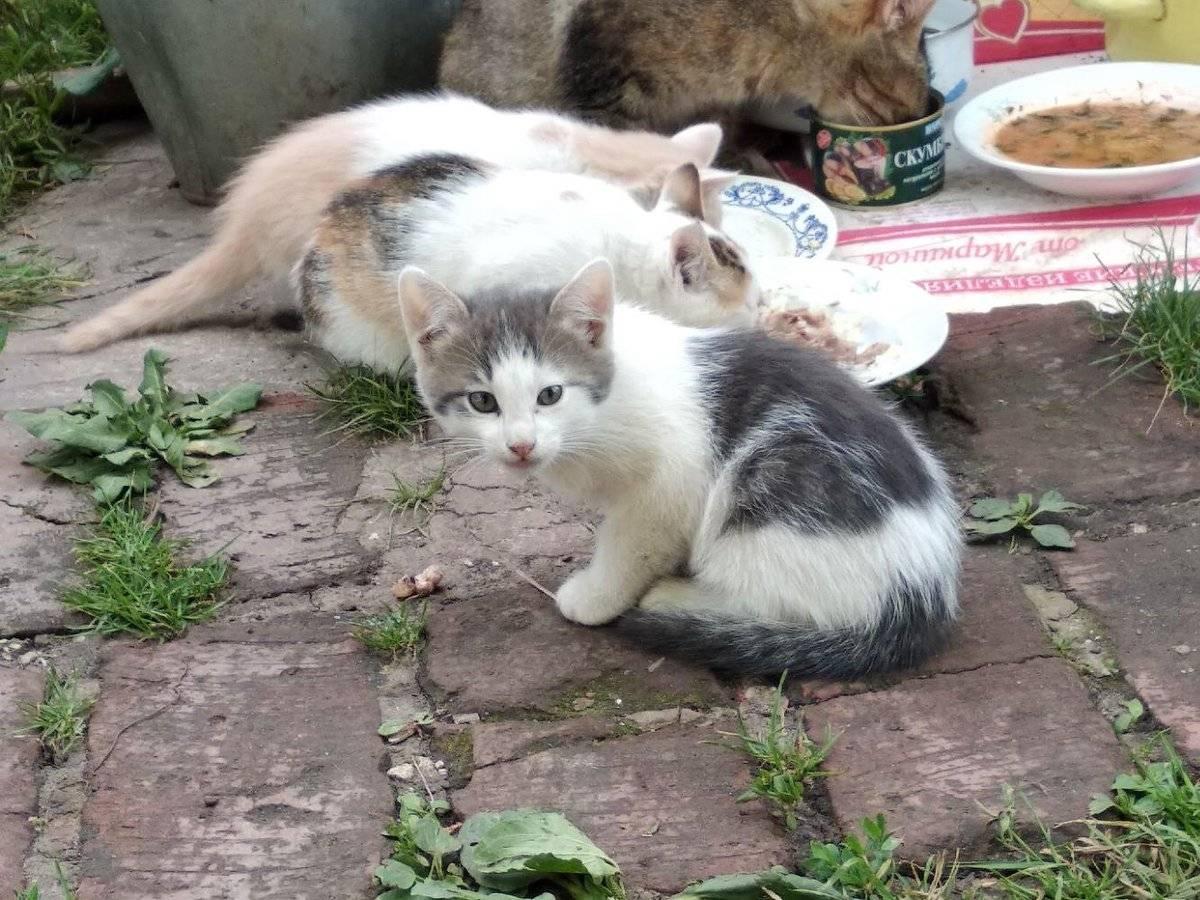 Куда отдать кошку: приюты, через интернет, котокафе