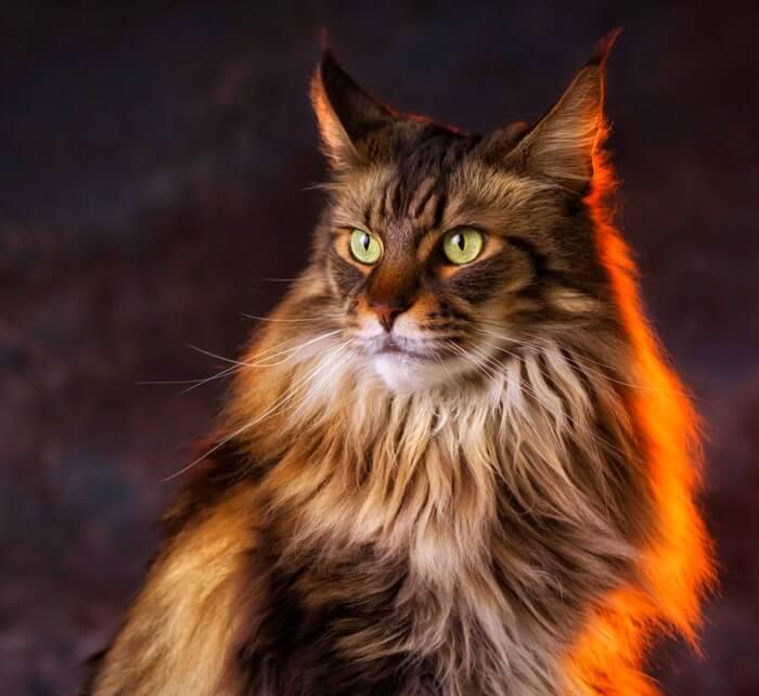 Топ 10 самые красивые кошки в мире