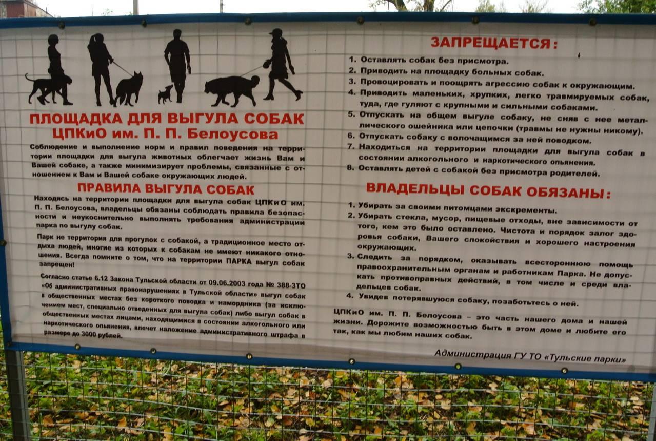 Площадка для выгула собак: основные нормы и правила, как организовать