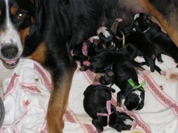 Чем кормить собаку после родов
